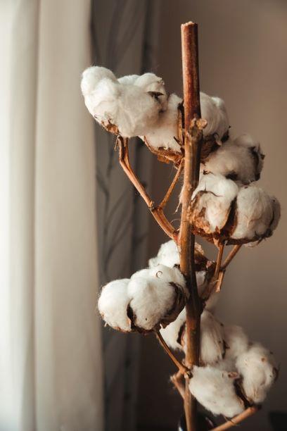 綿花のドライフラワー