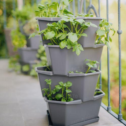 ベランダ菜園のプランターでじゃがいも栽培