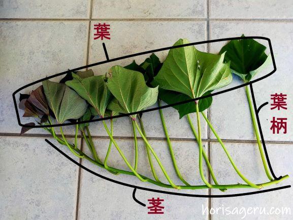 葉と葉柄と茎がついたサツマイモのつるの説明