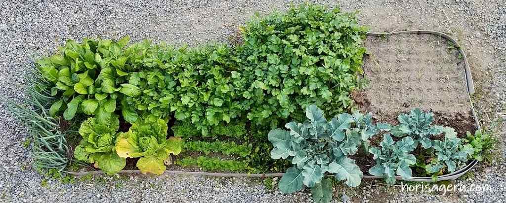 家庭菜園を始める為の庭の畑の作り方