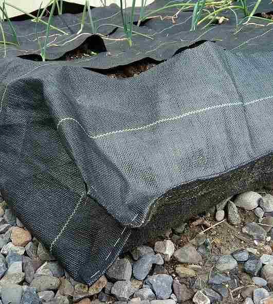 余ったタマネギ苗のプランター栽培の代用の作り方