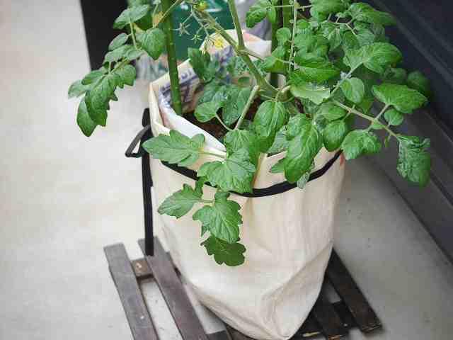 プランターの代わりに家庭菜園できる培養土の袋で縦型バージョン