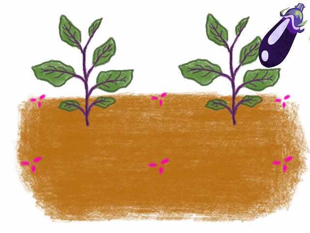 ナスのコンパニオンプランツの植え方と効果