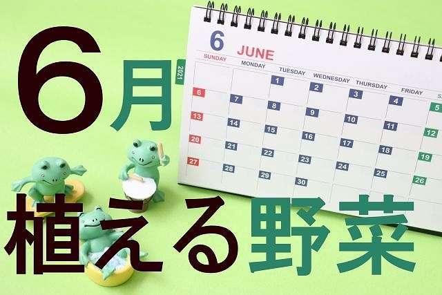 6月に植える野菜の種類一覧